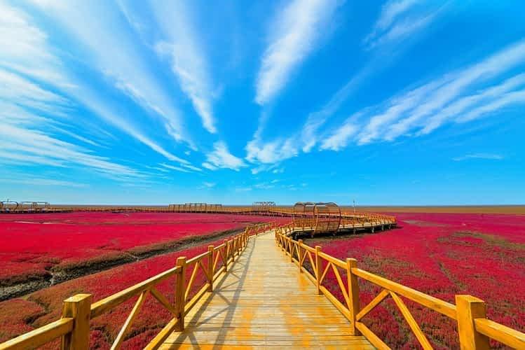 Червения плаж Панджин, Китай